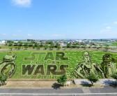 Star Wars! – this year's rice paddy Art in Aomori