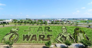 star wars rice paddy field