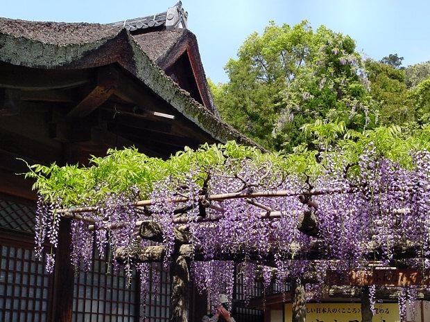 kasuga shrine fuji