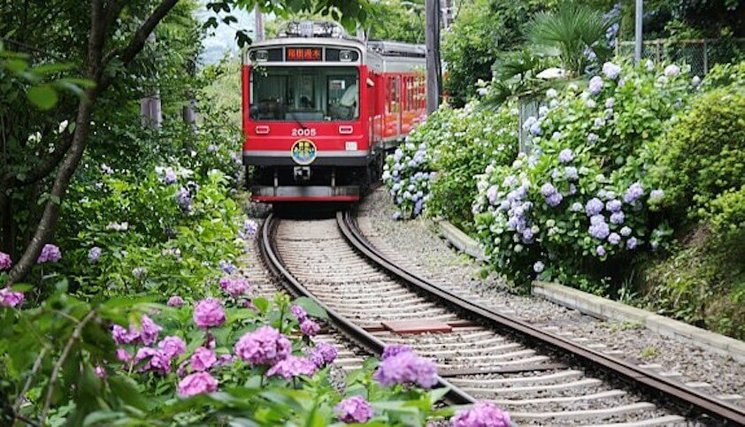 Hakone Tozan Railway Hydrangea train